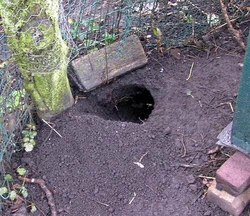 [img]http://www.jeannesweblog.nl/wp-content/uploads/2006/12/hol1.JPG[/img]