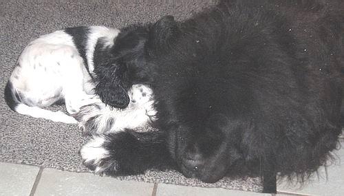 twee-honden.JPG