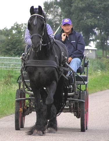 paard-en-wagen.JPG
